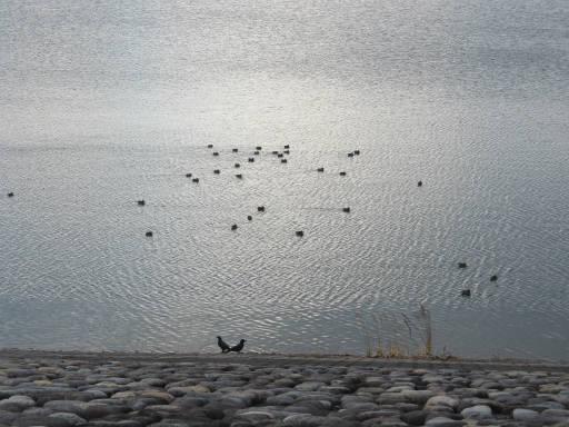 20111225・狭山湖19