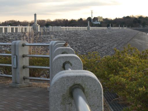 20120114・狭山湖RAW2