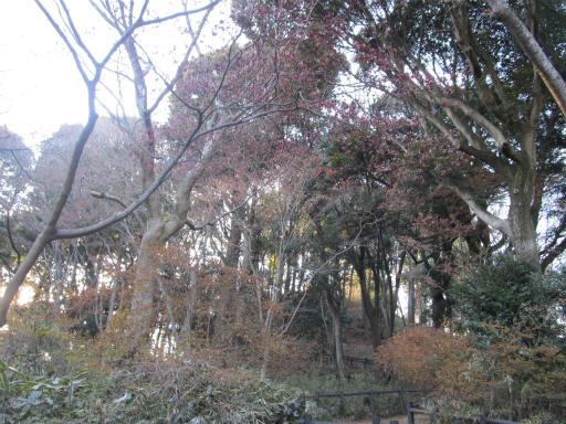 20120114・天覧山06-2
