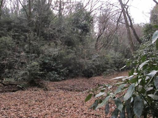 20120115・自然観察会06-2