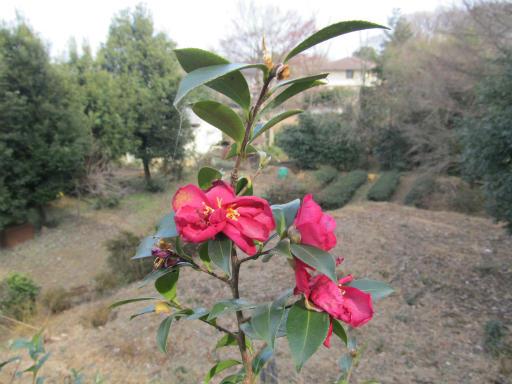 20120115・自然観察会28-2