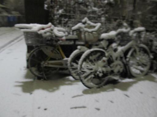 20120123・ドカ雪13