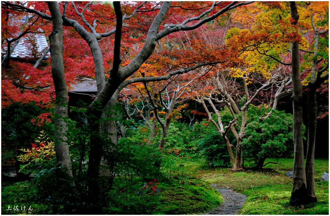 万博記念公園4
