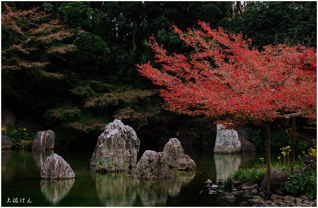 万博記念公園5