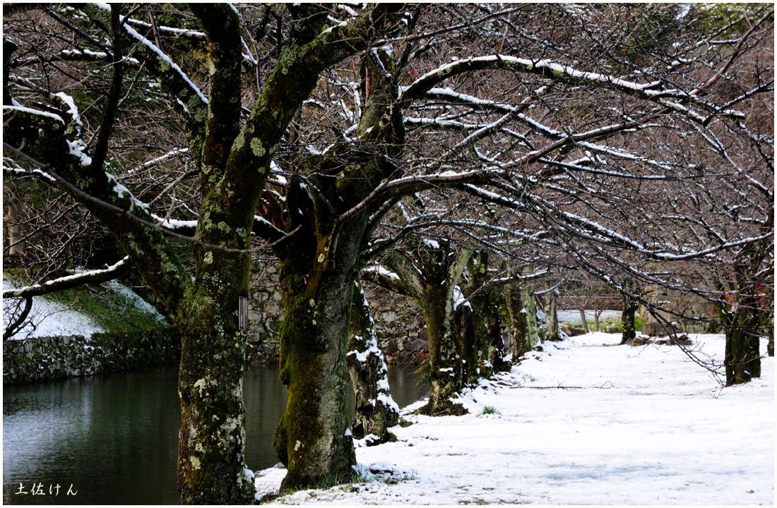 雪の彦根4