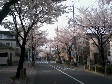 都内の桜 1