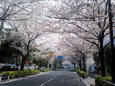 都内の桜 3