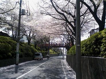都内の桜 5