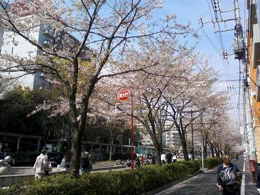 都内の桜 6