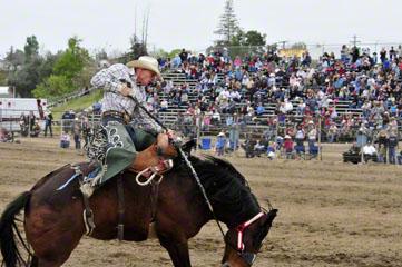 Saddle Bron, Jess Williams (NS), Elko, NV_DSC7364-4.10.10 (2)