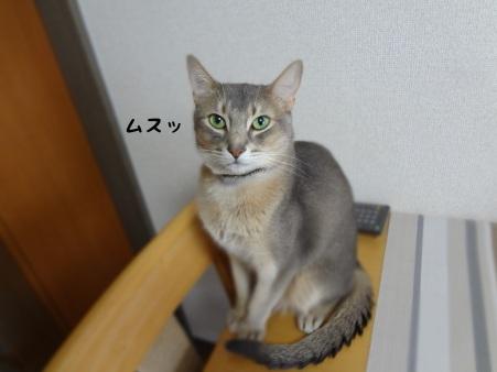 a12272.jpg